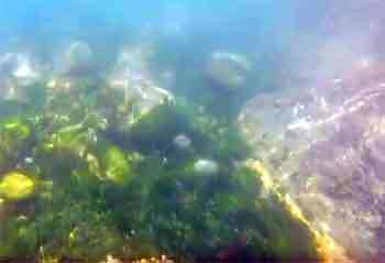 Mullion cove underwater